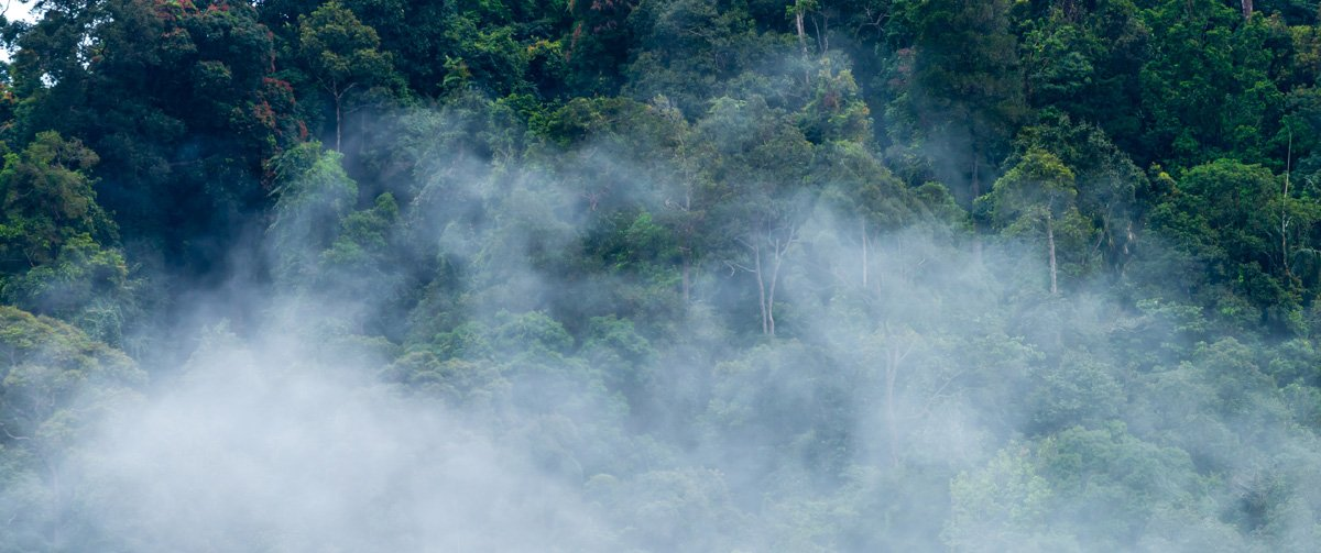 Rain forest with smoke